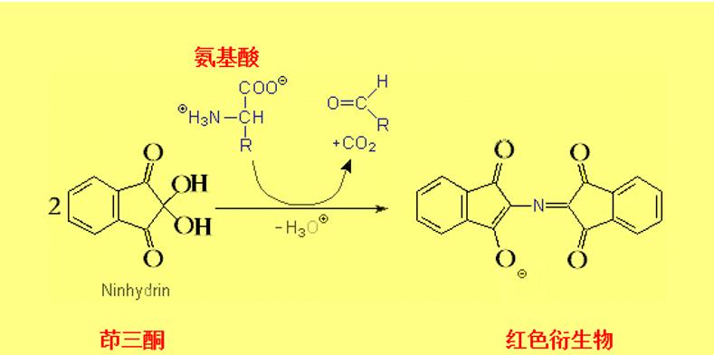 茚三酮法测定氨基酸_产品中心